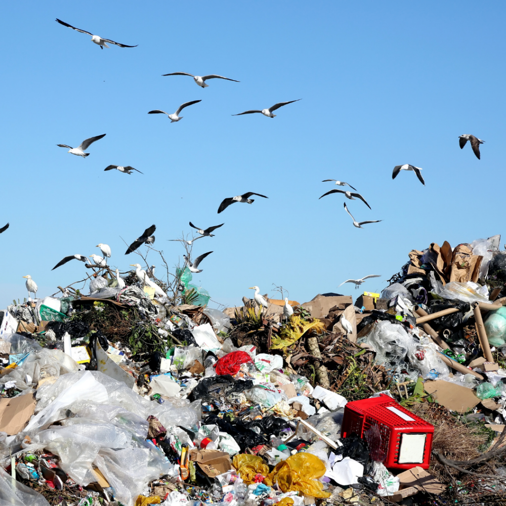 Types of Wastes You Should Know